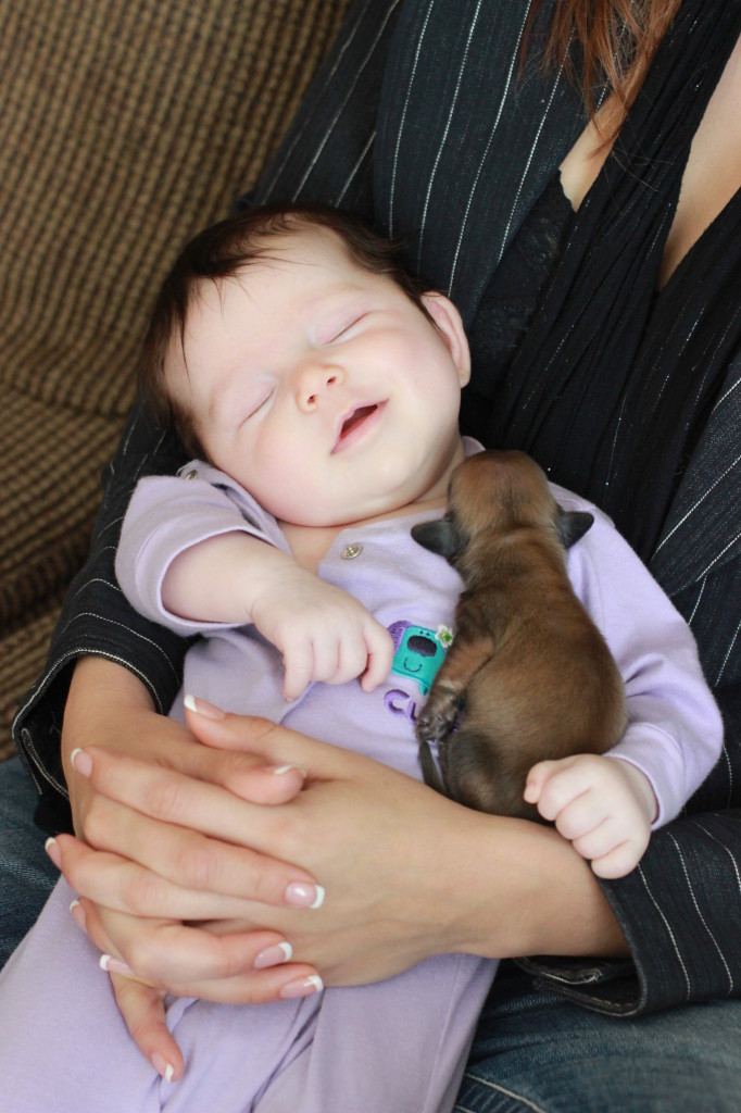 Can't get much cuter than babies and puppies!