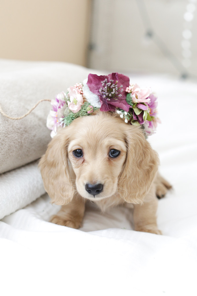"""""""Mom, do I have to wear this?!"""" - Elsa 8 weeks"""