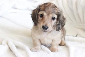 Milo 6 weeks b