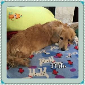 Milo SF