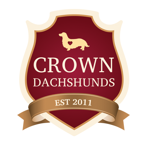 Crown Dachshunds